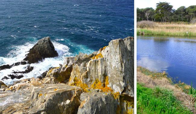 Côte et lagunes à Porquerolles
