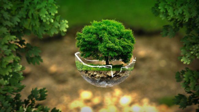 Une planète plus verte, l'entreprise doit y contribuer !
